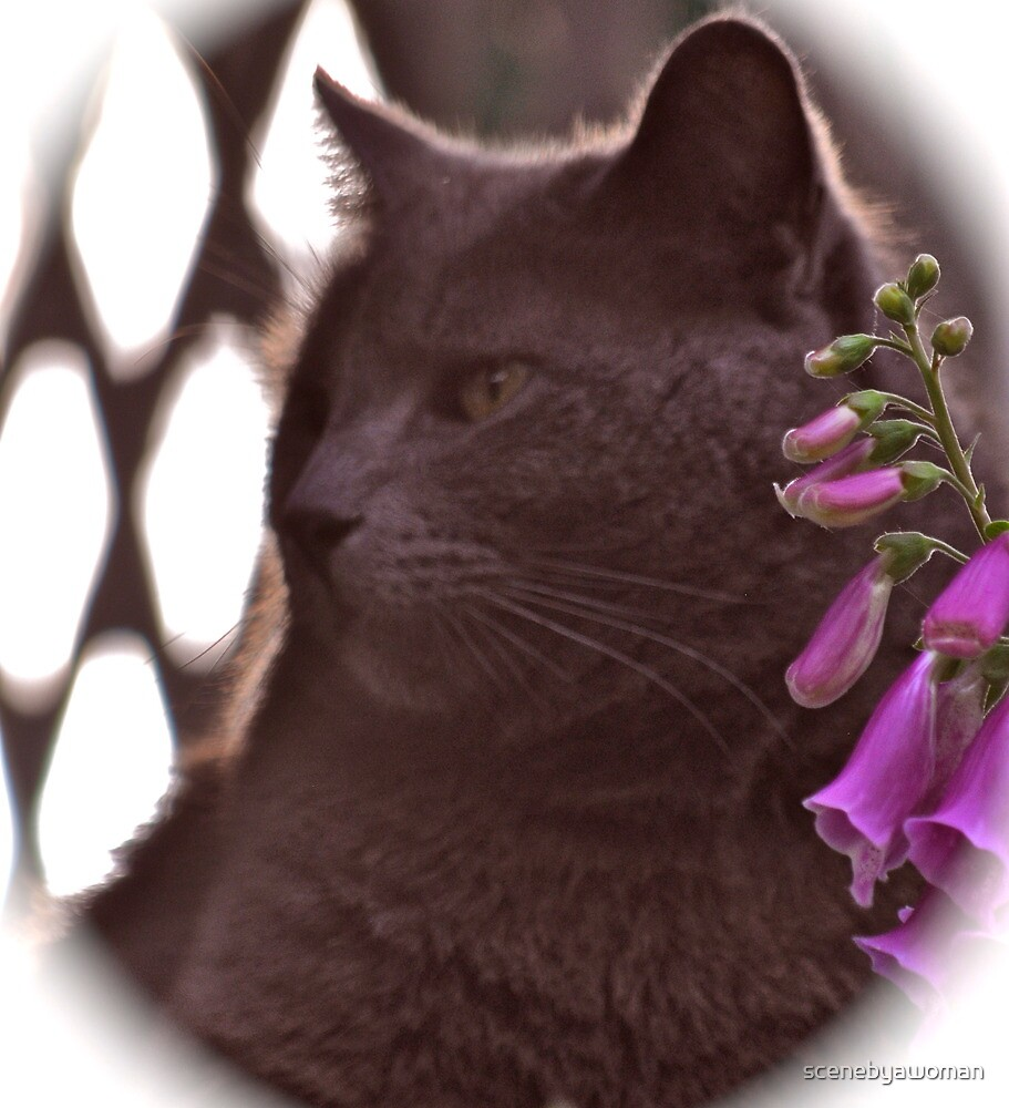 Fox Glove And A Cat by scenebyawoman