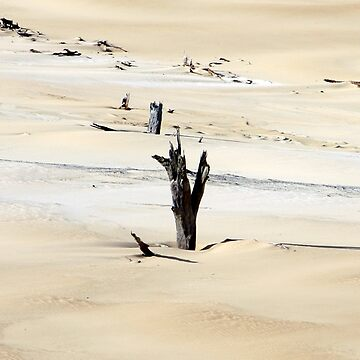 Sand Tool sand blow, Fraser Island, Qld. by snappypixie