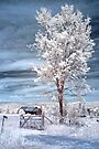 Country Tree - Infrared by Debbie Pinard