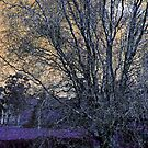 Twisty Willow by Sherie Howard