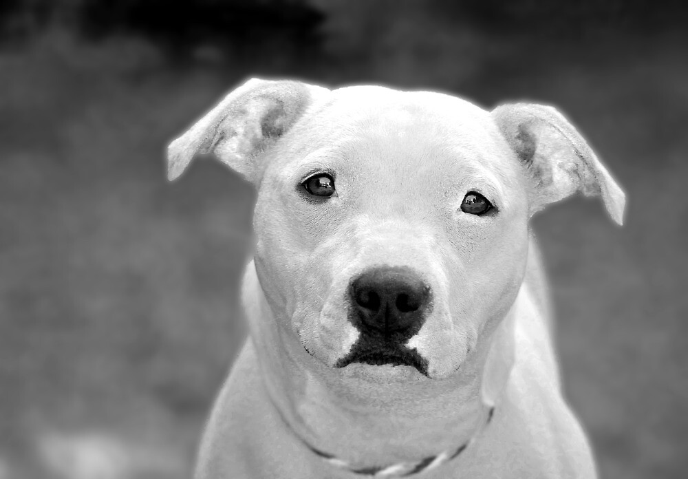 Just because I'm a Staffie by Garry Copeland