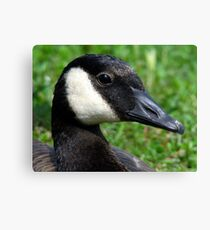 Canadian WaterFowl Canvas Print