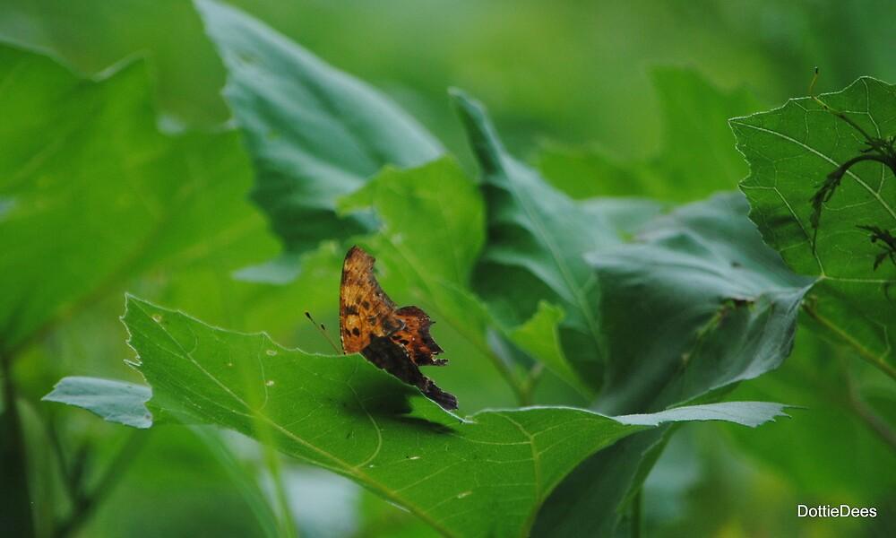 Comma Butterfly by DottieDees