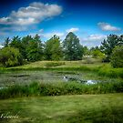 Lilies on the Pond by LandLimages