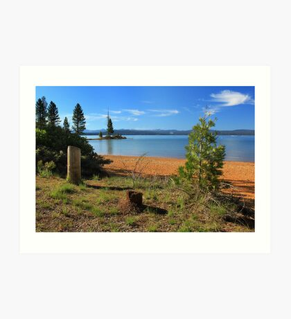 Pine Trees In Lake Almanor Art Print