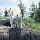 Polar Bear Hill by Shawty's Photography
