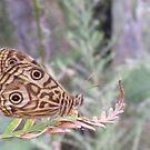 Last of the summer butterflies by Lydia Heap