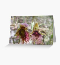 Beards are the fashion. Red Beard Orchid- Calochilus paludosus; Purple Beard Orchid - Calochilus robertsonii  Greeting Card