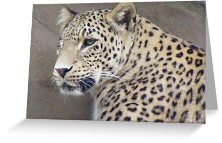 Snow Leopard - Panthera uncia by Lydia Heap