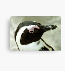 South African Penguin Portrait Canvas Print
