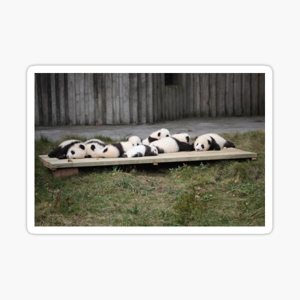 A Platter Of Pandas Sticker