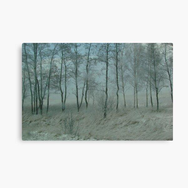 WINTER WONDER FOREST II Canvas Print