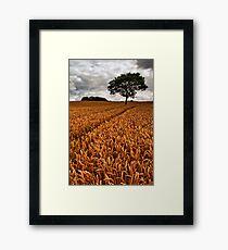 bumper crop Framed Print