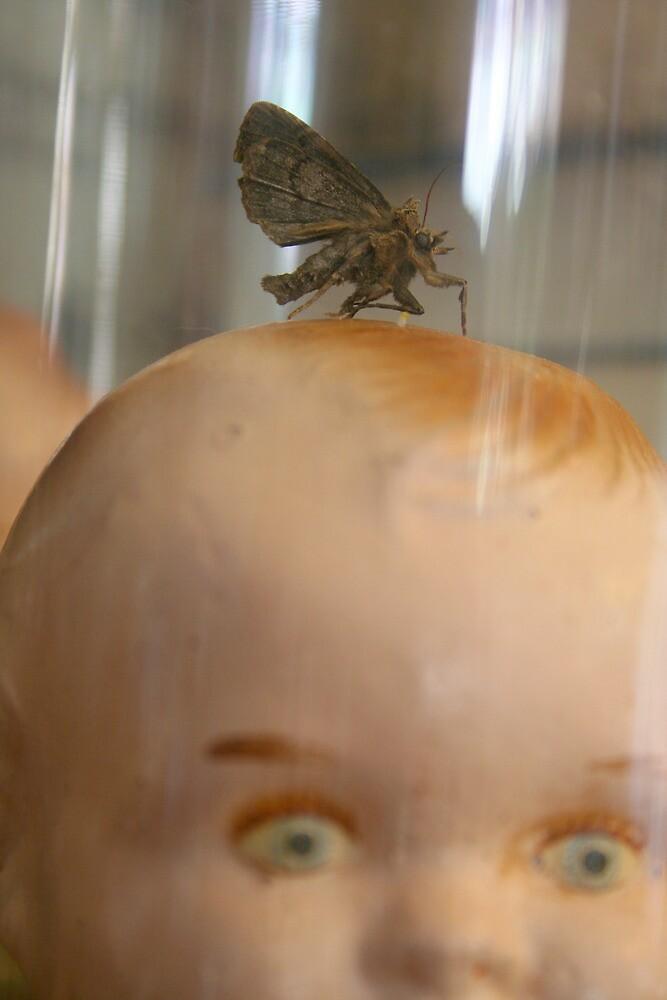 Mr Moth by Amanda Clegg