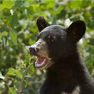 Black Bear Cub by Wayne Wood