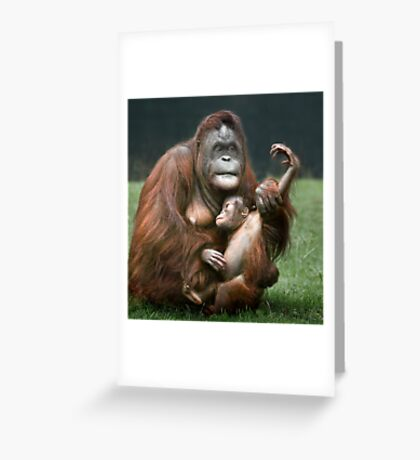 Orangutan Mother and Baby Greeting Card