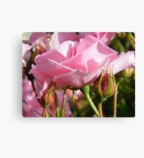 Rosebed Canvas Print