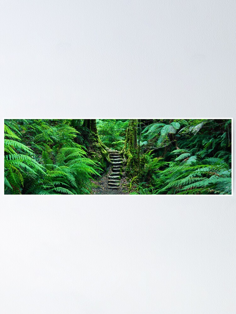 Alternate view of Grand Canyon Track, Blue Mountains, New South Wales, Australia Poster
