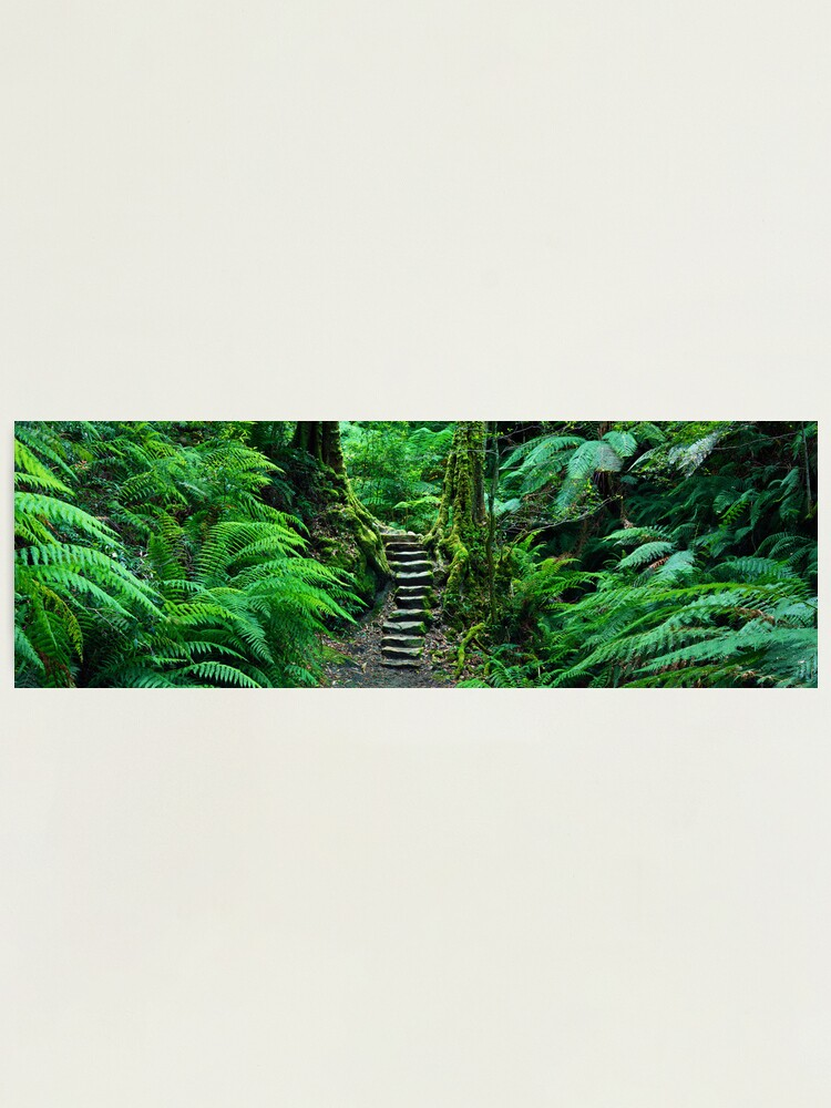 Alternate view of Grand Canyon Track, Blue Mountains, New South Wales, Australia Photographic Print
