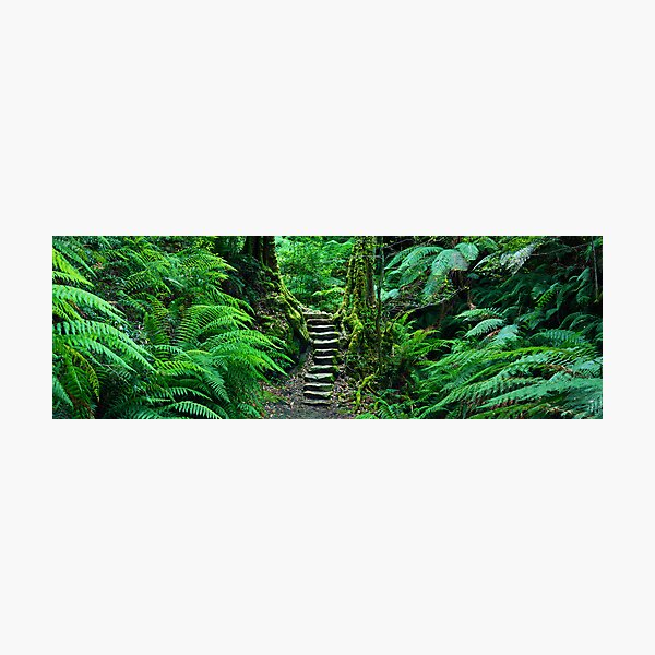Grand Canyon Track, Blue Mountains, New South Wales, Australia Photographic Print