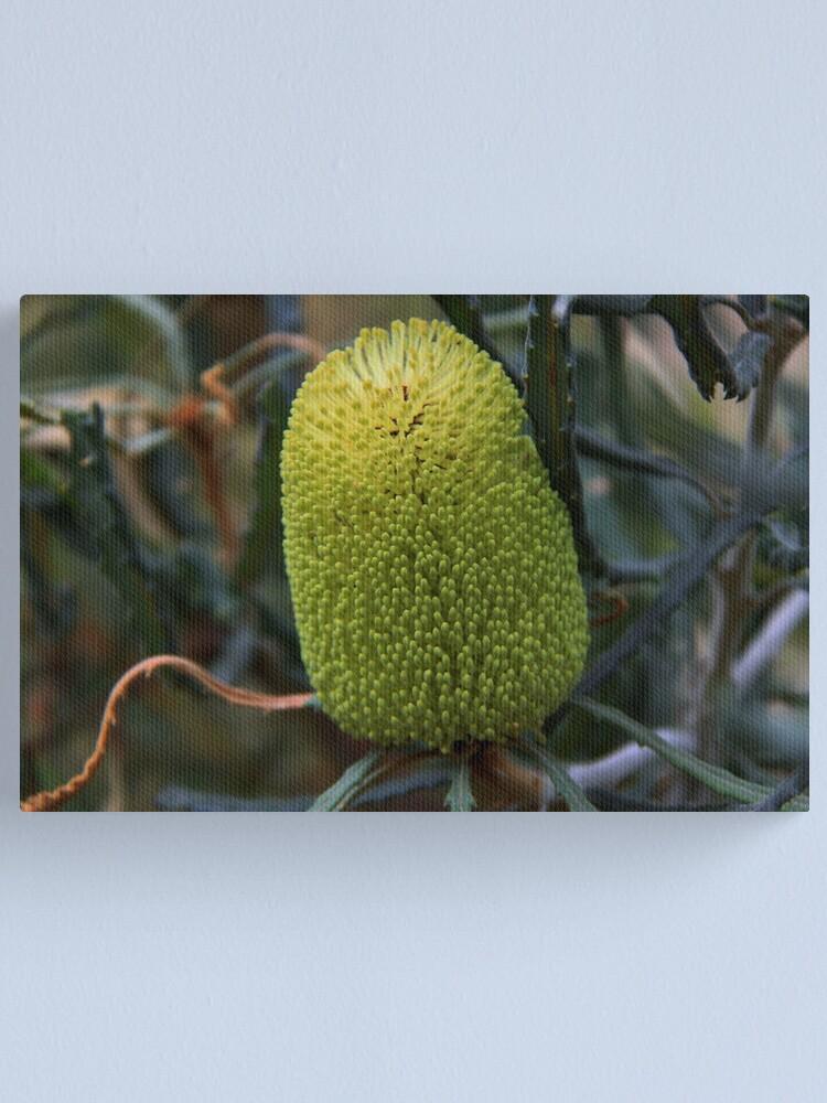 Alternate view of Banksia pilostylis  Canvas Print
