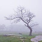fog at the rocks by ketut suwitra