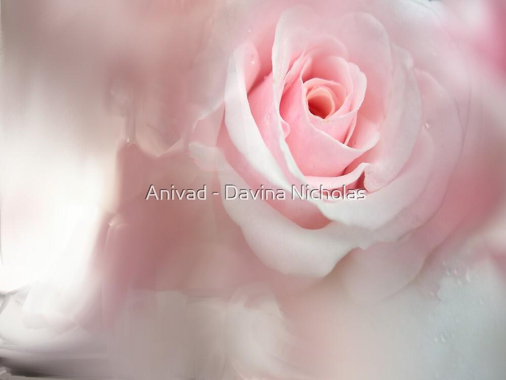 Pink Rose by Anivad - Davina Nicholas