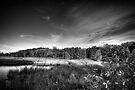 Wetlands by Nate Welk