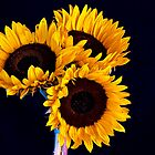 Three Sunflowers by George Lenz