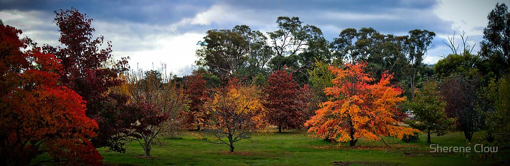 Our Autumn Colour by Sherene Clow
