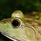 Froggy! by vasu
