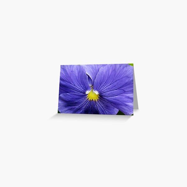 Purple macro Greeting Card