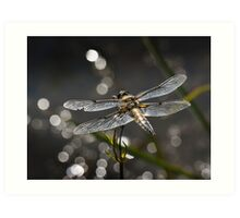 Broad Bodied Chaser Art Print