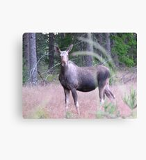 The Elk Encounter. Nr 1: The Meeting In The Twilight Hour. Canvas Print