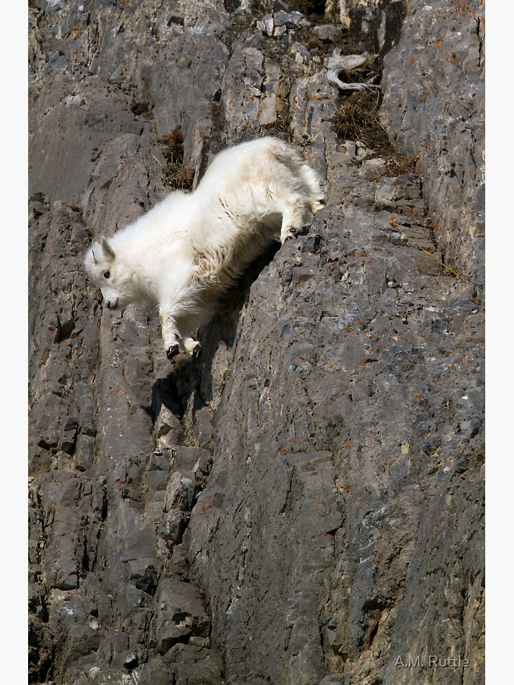 Playing with Gravity - Mountain Goat Kid in Free Fall by annruttle