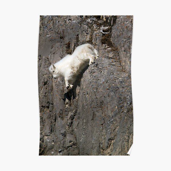 Playing with Gravity - Mountain Goat Kid in Free Fall Poster
