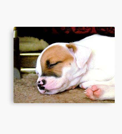 Marlie sleeping Canvas Print