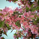 Pink Cherry Blossoms by Marilyn Harris