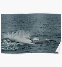Flipper Slapping Doric Poster