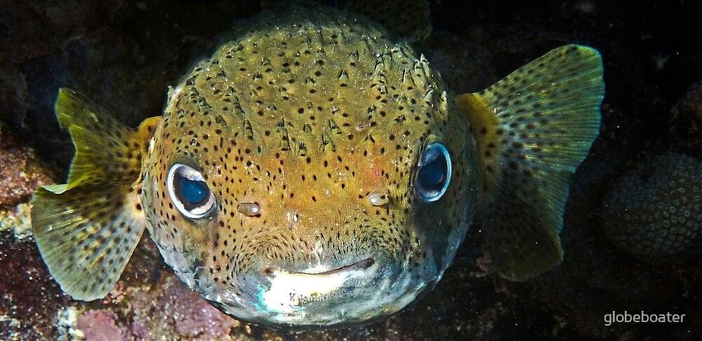 Porcupine Fish by globeboater