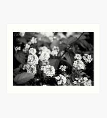 Little Flowers - Black and White Print Art Print