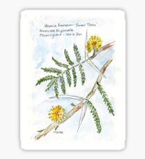 Acacia karroo - Botanical illustration Sticker