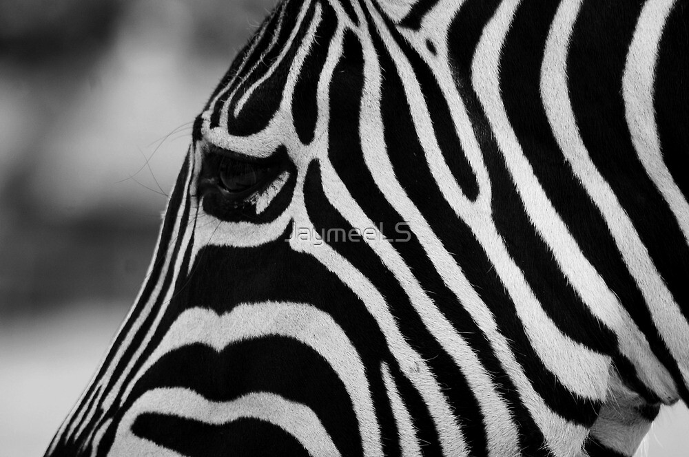 Black with white stripes, or white with black? by JaymeeLS