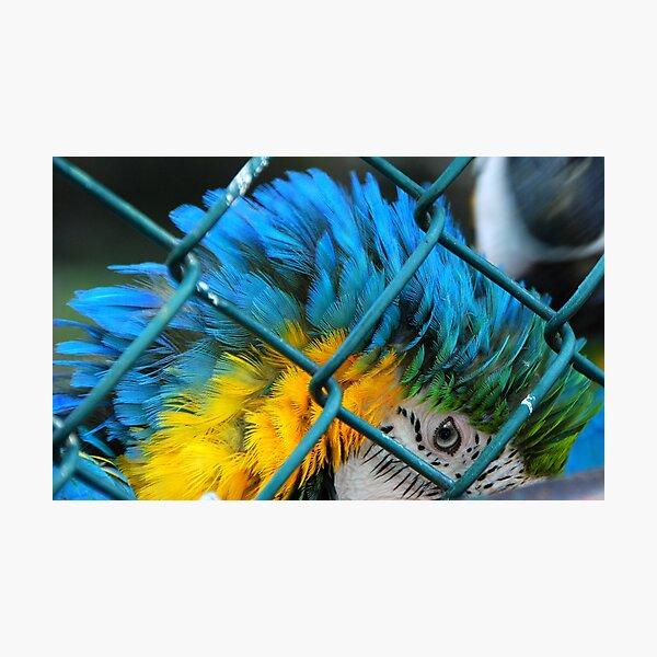 BLUE...  Photographic Print