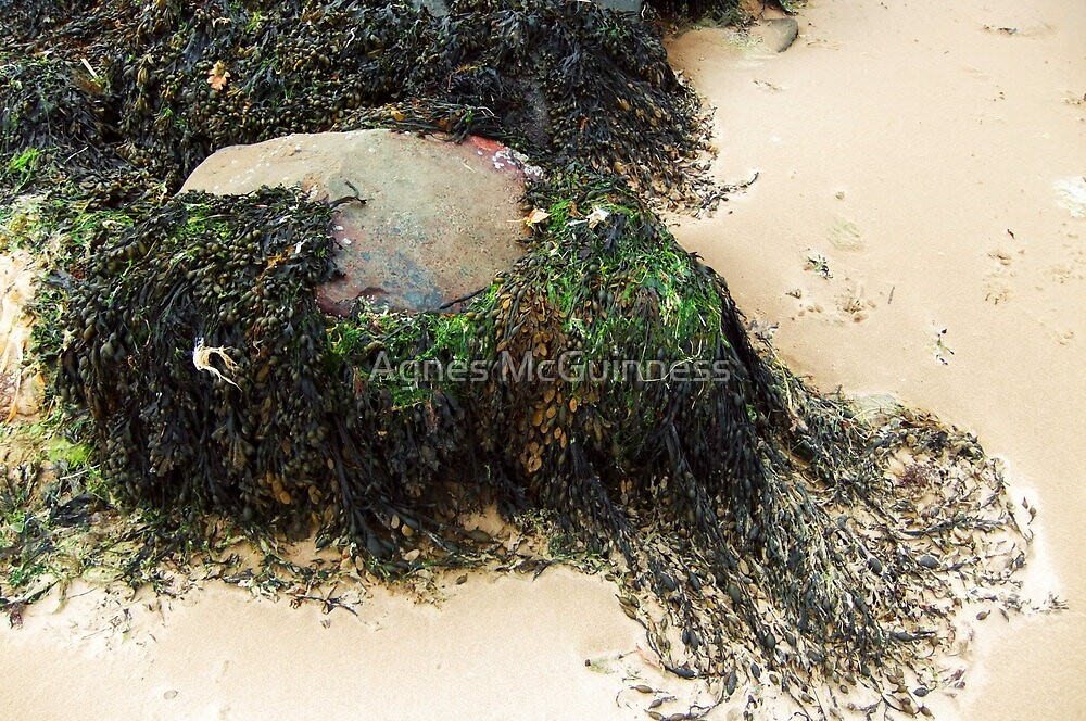 Seaweed by Agnes McGuinness