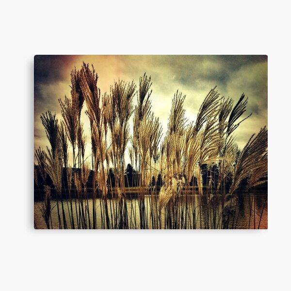 Alzette river Canvas Print