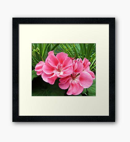 Tropical Pink Framed Print