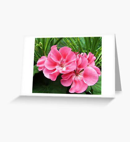 Tropical Pink Greeting Card