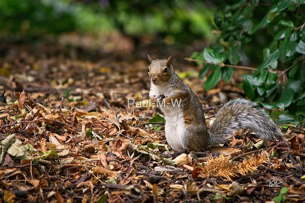 Aw Nuts. by Paul-M-W