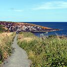 74 - CULLERNOSE POINT, NORTHUMBERLAND (D.E. 2012) by BLYTHPHOTO